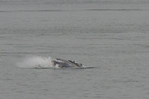 Beluga Services