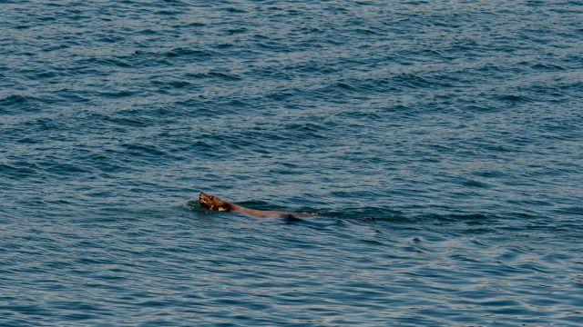 Sea Lion says Hello