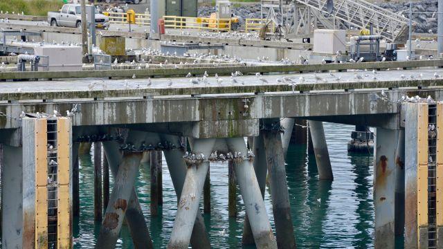 Docks of Homer, AK